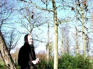 La taille des arbres en rideau - Jac Boutaud