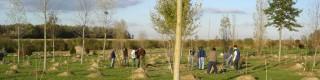 Novembre: choisir, planter et entretenir les arbres et arbustes