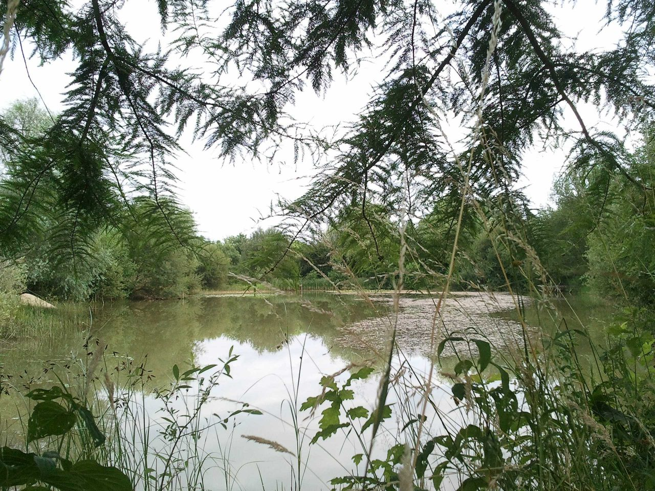 L'étang moderne...