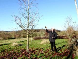 La formation d'un arbre en port semi-libre
