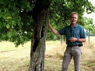 Les arbres creux et leur vitalité