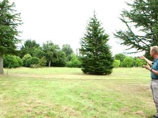 Les arbres en formes libre, semi-libre et cépée