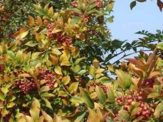 Mai: les arbres et arbustes comestibles