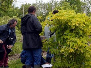 Les arbustes d'ornement: bien les connaître pour mieux les intégrer dans la gestion différenciée