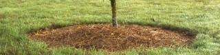 Mars: pour un entretien plus facile et une gestion respectueuse de l'environnement dans les parcs et jardins
